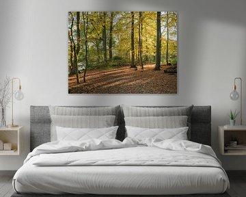 forêt en couleur automnale sur le veluwe
