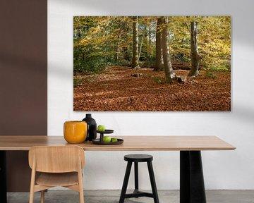 forêt aux couleurs automnales avec des feuilles dorées