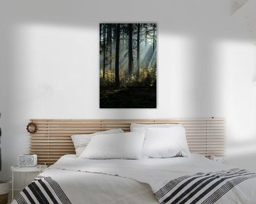 Lichtshow in het bos van Eelke Brandsma