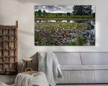 Lac dans le Dwingelderveld sur Tjamme Vis