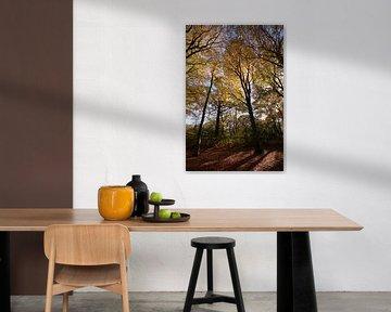 Herbstwald von Erik Reijnders