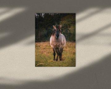 Konikpaard in Lentevreugd (Wassenaar) van Arisca van 't Hof