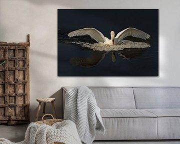 de zwaan van Petra Vastenburg