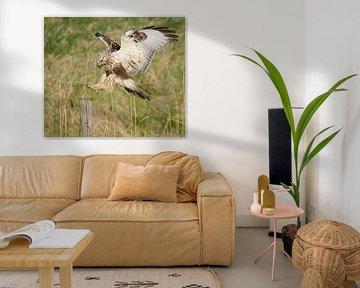 Juveniele Ruigpootbuizerd (Buteo lagopus) landend op een houten paal, Zeeland van Nature in Stock