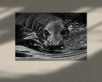 Snuitje in het water. Nijlpaard van Michael Semenov