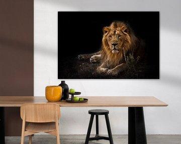 The beast is a powerful maned male lion von Michael Semenov