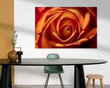 orangefarbene Rose von Paul Veen