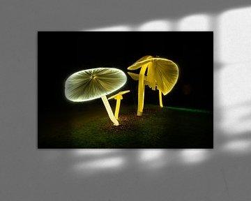 Champignons lumineux sur Els Hattink