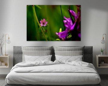 Wilde Bloemen van Arno-Jan Boere