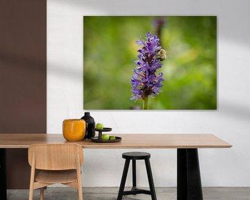 Biene auf violetter Blume von Ans Bastiaanssen