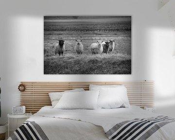 Schafe auf der Wiese von Valerie de Bliek