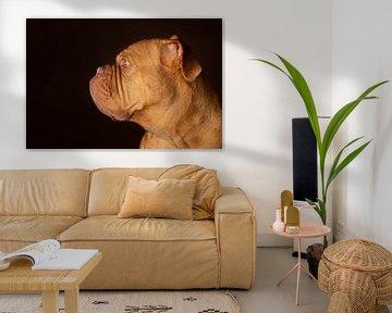 Bordeauxdog Dog Hond van Patrick Reymer