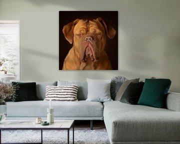 Bordeauxdog Dog Honden van Patrick Reymer