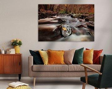 Rivier de Hoëgne in de Ardennen van AGAMI Photo Agency