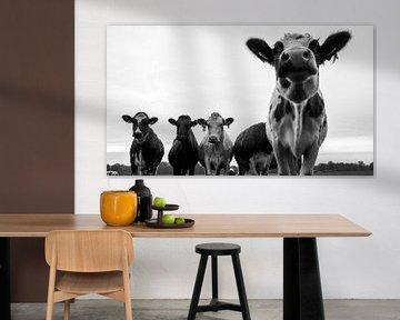 neugierige Kühe schwarz-weiß von Liv Jongman