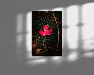 Herbstfarbe I von Kristoff De Turck