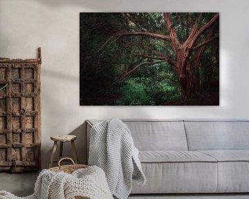 Alter Baum von Kristoff De Turck