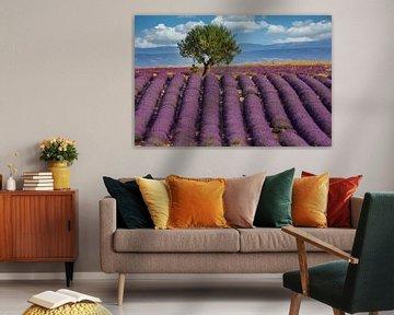 Lavendelfeld in der Provence von Uwe Merkel