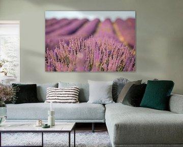 Provence Lavendelfeld von Uwe Merkel