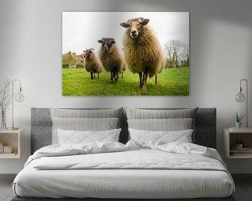 # Schafe von Jeroen Smit