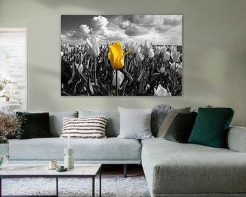 De alleenstaande Tulp von Brian Morgan