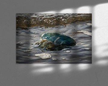 """""""Blaue Qualle von Tanja Otten Fotografie"""