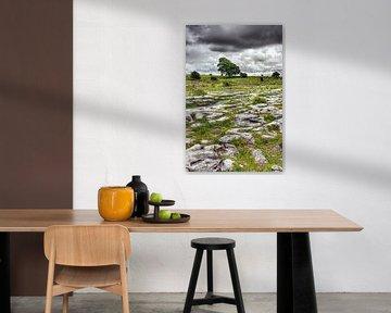 Boom in het kalksteenlandschap van The Burren, Ierland. sur Hans Kwaspen