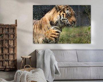 """""""Tigerdusche von Tanja Otten Fotografie"""