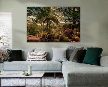 Dschungel der Kakteen von Dennis Schaefer