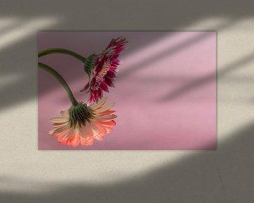 Blumen Traum 2 von Marcel Kieffer