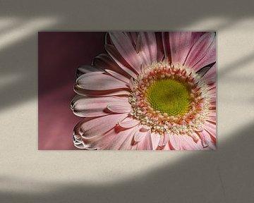 Blumen Traum 4 von Marcel Kieffer