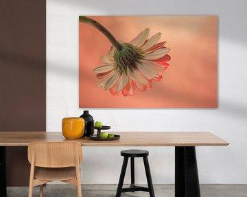 Blumen Traum 5 von Marcel Kieffer