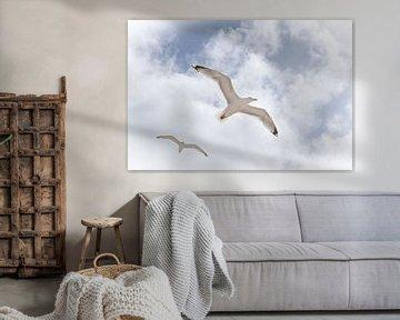 'Vrijheid' van Tanja Otten Fotografie
