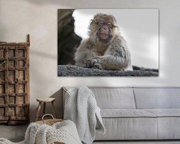 """""""Dutten von Tanja Otten Fotografie"""