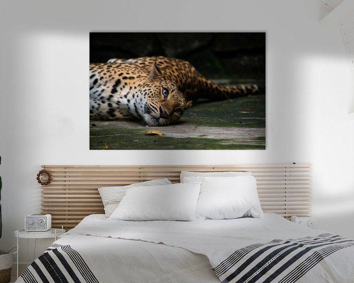 Beispiel: Fauler Leopard von Jeroen Pol