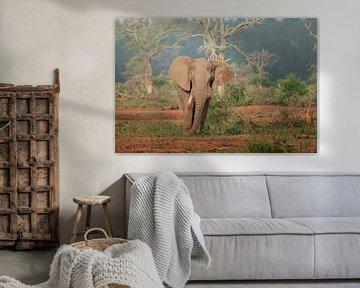 Olifant in het Kruger Park van Petra Lakerveld