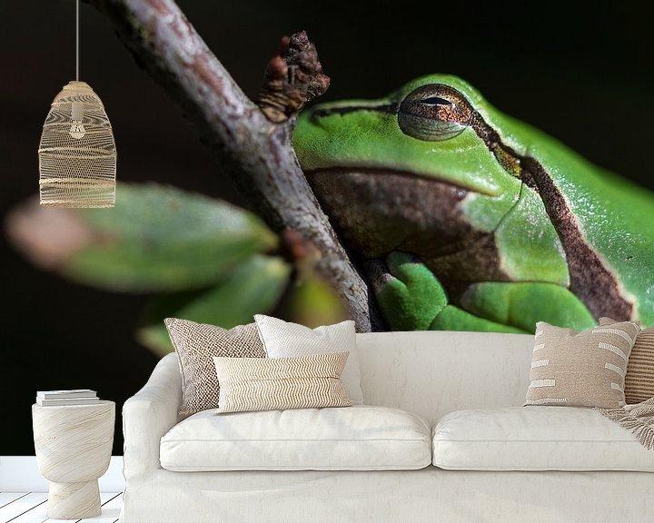 Beispiel fototapete: Laubfrosch   Laubfrosch auf schönem Zweig von Servan Ott
