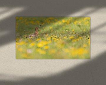 Vogels | Grutto in een weiland tussen de paardenbloemen 1 van Servan Ott
