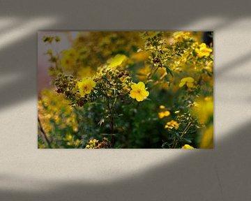 Blumen gelb von Dawid Baniowski