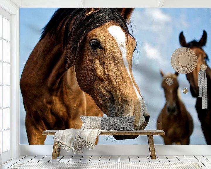 Beispiel fototapete: Pferd im Holland. Schönfühlend von Dawid Baniowski