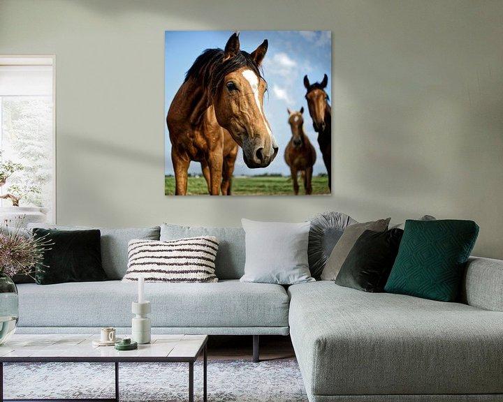 Beispiel: Pferd im Holland. Schönfühlend von Dawid Baniowski