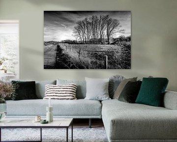 Nackte Bäume von Marcel van Kan