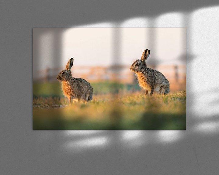 Beispiel: Natur | Hasen in der Nähe der Wiese von Servan Ott