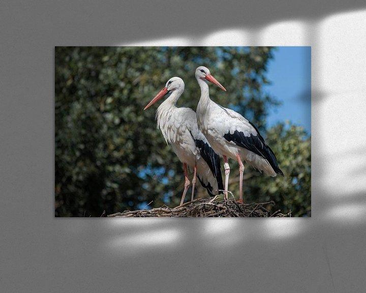 Beispiel: Zwei erwachsene Störche Ciconiidae stehen auf einem großen Nest. von Tonko Oosterink