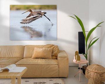 Vogels | Grutto lift off! van Servan Ott