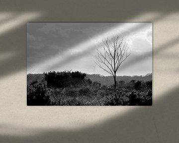 Eine Landschaft der Veluwe von Carlijn van Gerrevink