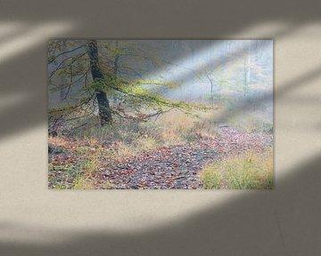 Een pad in mistige herfst bos van Olha Rohulya
