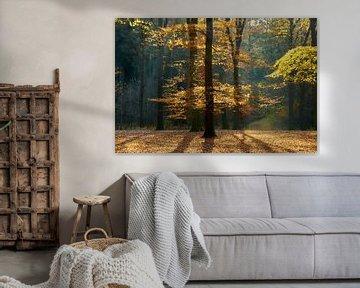 Forêt d'automne en contre-jour sur Ad Jekel