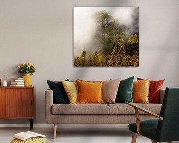 Fog forest II van Steven Driesen