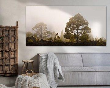 Fog forest III van Steven Driesen